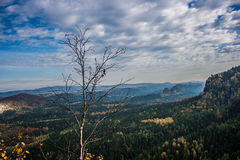 Ajardine no parque nacional do suisse saxonian Imagens de Stock