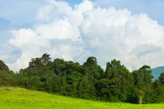 Ajardine no parque, no campo contra o céu azul e nas nuvens Fotografia de Stock