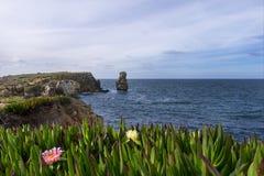 Ajardine no ponto de Papoa em Peniche Portugal com o Mesembryanthemum das plantas no primeiro plano Imagem de Stock Royalty Free