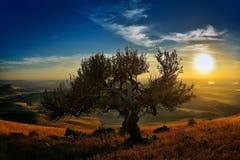 Ajardine no por do sol no outono, Dobrogea, Romênia Imagens de Stock