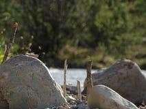 Ajardine no rio Izar perto da mancha do vale, Baviera Imagens de Stock Royalty Free
