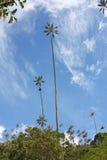 Ajardine no vale de Cocora com palma de cera, entre o mounta Imagem de Stock Royalty Free