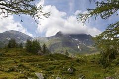 Ajardine nos alpes Imagem de Stock Royalty Free