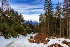 Ajardine nos cumes com os pastos verdes frescos da montanha e em partes superiores neve-tampadas da montanha no fundo Tirol, Áust Fotografia de Stock
