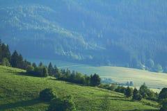 Ajardine nos prados e nas florestas da república eslovaca Foto de Stock