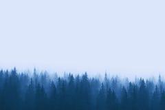 Ajardine nos tons azuis - floresta do pinho nas montanhas com névoa Foto de Stock