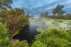 Ajardine, o alvorecer ensolarado, raios de sol na névoa Fotos de Stock