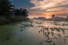 Ajardine, o alvorecer ensolarado, raios de sol na névoa Imagem de Stock