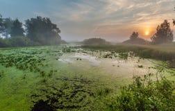 Ajardine, o alvorecer ensolarado, raios de sol na névoa Foto de Stock