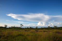 Ajardine o céu azul com a nuvem no parque nacional de Phu Hin Rong Kla, Fotografia de Stock