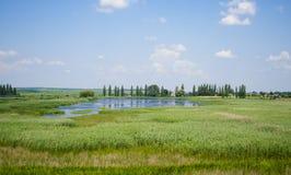 Ajardine o céu com nuvens e o verão coberto de vegetação dos juncos do lago Foto de Stock