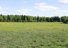 Ajardine o campo com grama verde e a floresta na distância Imagem de Stock Royalty Free