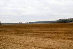 Ajardine o campo, a terra marrom com camas, os sulco para arar com as colheitas no fundo da floresta e o céu azul Imagens de Stock Royalty Free