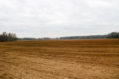 Ajardine o campo, terra marrom com camas, sulco para arar, semeando a grão em um fundo da floresta Foto de Stock Royalty Free