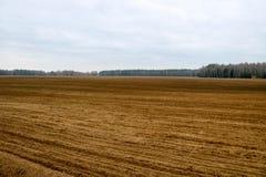 Ajardine o campo, terra para arar com as colheitas no fundo da floresta Imagem de Stock