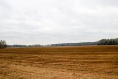 Ajardine o campo, terras acima escavadas marrons com camas, sulco para arar, semeando a grão em um fundo da floresta e do céu azu Imagens de Stock