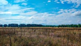Ajardine o campo verde sob o céu colorido do verão borbulhante no nascer do sol do alvorecer do por do sol Copyspace no céu claro Imagem de Stock Royalty Free