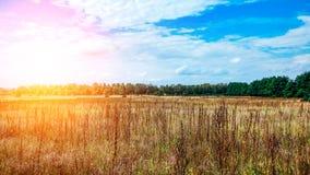 Ajardine o campo verde sob o céu colorido do verão borbulhante no nascer do sol do alvorecer do por do sol Copyspace no céu claro Imagem de Stock