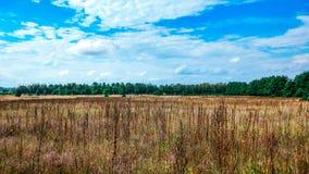 Ajardine o campo verde sob um céu colorido do verão borbulhante no nascer do sol do alvorecer do por do sol Copyspace no céu clar Imagem de Stock