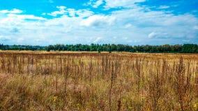 Ajardine o campo verde sob um céu colorido do verão borbulhante no nascer do sol do alvorecer do por do sol Copyspace no céu clar Imagens de Stock