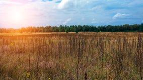 Ajardine o campo verde sob um céu colorido do verão borbulhante no nascer do sol do alvorecer do por do sol Copyspace no céu clar Foto de Stock Royalty Free