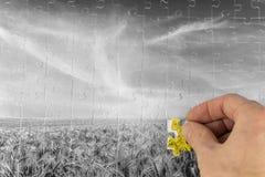 Ajardine o enigma de serra de vaivém de um campo de trigo greyscale Imagem de Stock Royalty Free