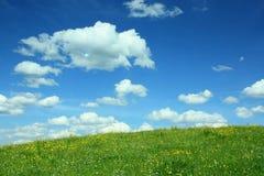 Ajardine o fundo com prado do botão de ouro e o céu nebuloso Imagem de Stock