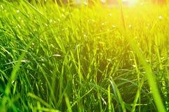 Ajardine o fundo do verão - close up da grama verde fresca no gramado sob a luz solar brilhante Foto de Stock Royalty Free