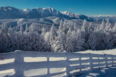 Ajardine o inverno na cerca das montanhas e na árvore de abeto nevado Fotografia de Stock Royalty Free