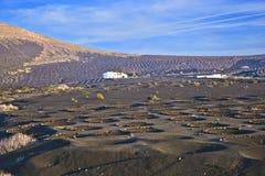 Ajardine o La Geria em Lanzarote, uma área do vinho Fotos de Stock