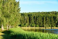 Ajardine o lago com juncos contra uma floresta na noite na luz solar em Rússia, Bielorrússia, Ucrânia Fotografia de Stock