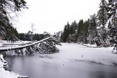 Ajardine o lago congelado inverno Lakamas com os wi cobertos árvore caídos Imagem de Stock