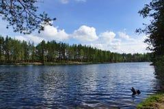 Ajardine o lago da floresta, as ondinhas na água e as madeiras no outro lado, verão Fotos de Stock Royalty Free