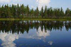 Ajardine o lago da floresta com reflexão das nuvens no céu e nos pinheiros na praia, verão Imagem de Stock Royalty Free