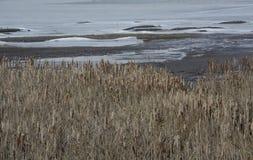 Ajardine o lago do inverno o 25 de janeiro de 2016 em Sófia, Bulgária Imagens de Stock Royalty Free