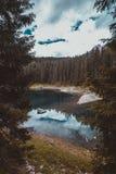 Ajardine o lago selvagem Misurina da natureza Fotografia de Stock Royalty Free