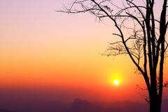 Ajardine o nascer do sol e a árvore da silhueta no céu bonito das cores Imagens de Stock Royalty Free