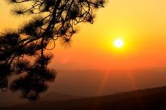 Ajardine o nascer do sol e a árvore da silhueta no céu bonito das cores Imagens de Stock
