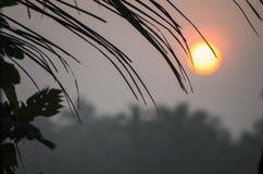 Ajardine o nascer do sol na névoa contra um contorno escuro Fotografia de Stock Royalty Free