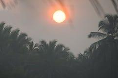 Ajardine o nascer do sol na névoa contra um contorno escuro Fotos de Stock Royalty Free