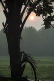 Ajardine o nascer do sol na névoa contra um contorno escuro Foto de Stock