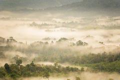 Ajardine o nascer do sol sonhador enevoado, fantástico nas montanhas, montagem Imagens de Stock