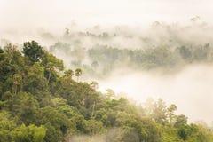 Ajardine o nascer do sol sonhador enevoado, fantástico nas montanhas, montagem Fotos de Stock