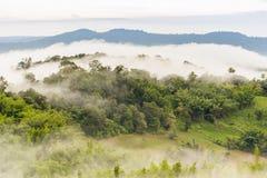 Ajardine o nascer do sol sonhador enevoado, fantástico nas montanhas, montagem Fotos de Stock Royalty Free