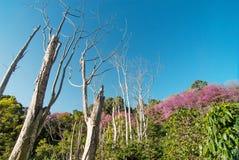 Ajardine o ponto de vista do suthep de Doi - monte do pui de Doi em Chiangmai, Foto de Stock