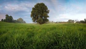 Ajardine o por do sol com névoa em um campo com única grama do carvalho Imagens de Stock