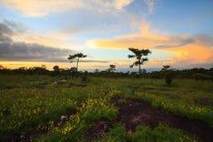 Ajardine o por do sol e as flores no parque nacional de Phu Hin Rong Kla, P Imagens de Stock
