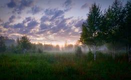 Ajardine o por do sol em uma floresta nevoenta do campo selvagem Fotografia de Stock
