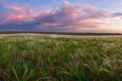 Ajardine o prado com uma grama e uma flor da pena Fotografia de Stock