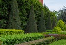 Ajardine o projeto no jardim botânico de Wroclaw, Polônia Foto de Stock